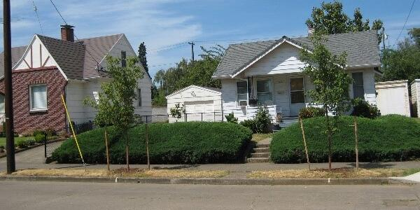 Two trees planted in the right-of-way in front of a house.