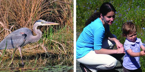 2 photos side by side: a blue heron, and a woman and toddler in a field of wildflowers