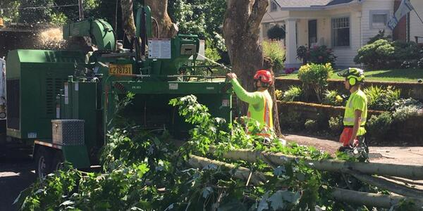 Two Urban Forestry arborists feed wood from a downed tree into a wood chipper.