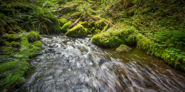 Stream flows through forest