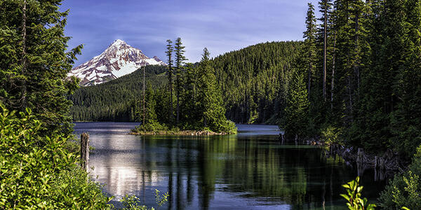 Photo of a lake with a small island in the middle and Mount Hood behind. The lake is surrounded by evergreen forest.