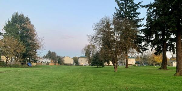 Grassy lawn with large trees and apartments in background