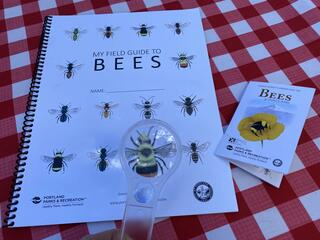 Magnifying lens showing a picture of a bee on the EE Bee Guide along with the pocket guide for bees.