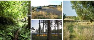 Color photos of outdoor spaces with forest and meadow.