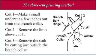 Three Cut Pruning Method