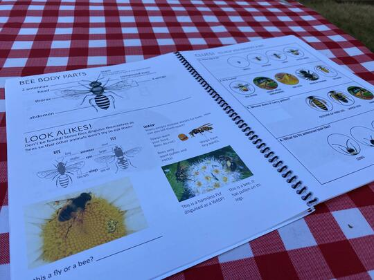 "A sample of pages in the ""My Field Guide to Bees"""
