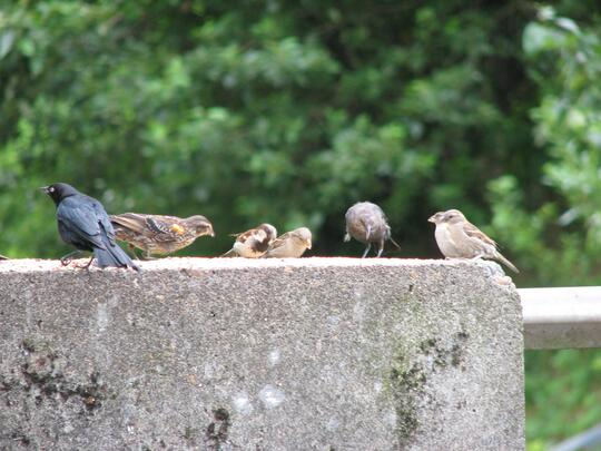 Closeup of 6 birds on a concrete post with trees in background