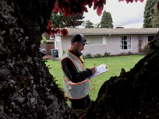Volunteer evaluating trees.