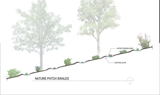 An illustration of the Irving Park Nature Patch swale section.