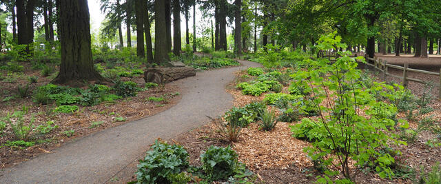 A view of the nature patch at Alberta Park in NE Portland.