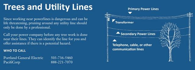 Trees and Utility Lines