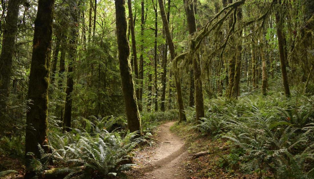 Forest Park   Portland.gov