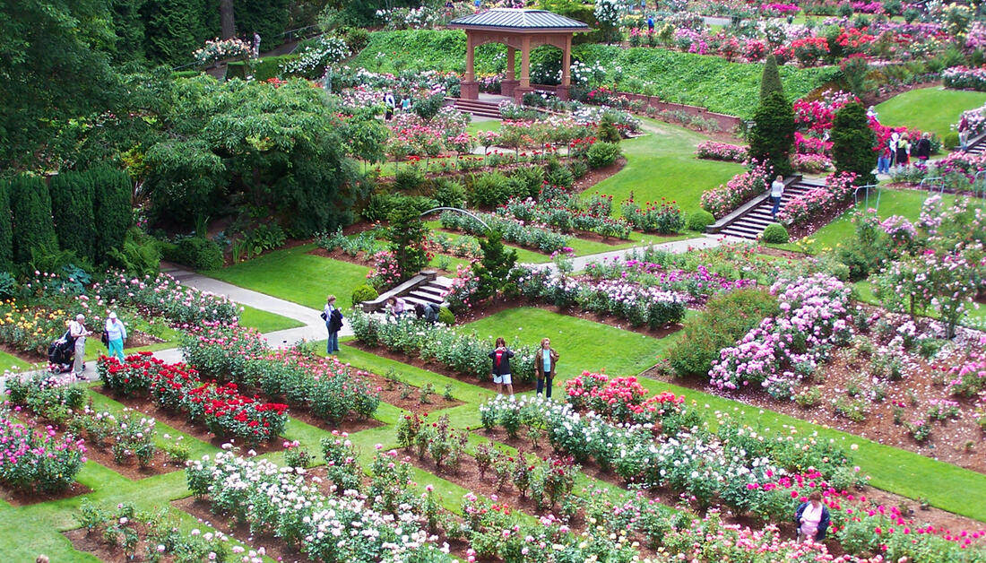 Washington Park - International Rose Test Garden   Portland.gov